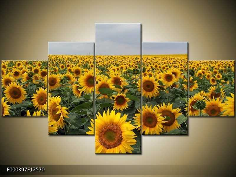 Obraz na zeď - slunečnice