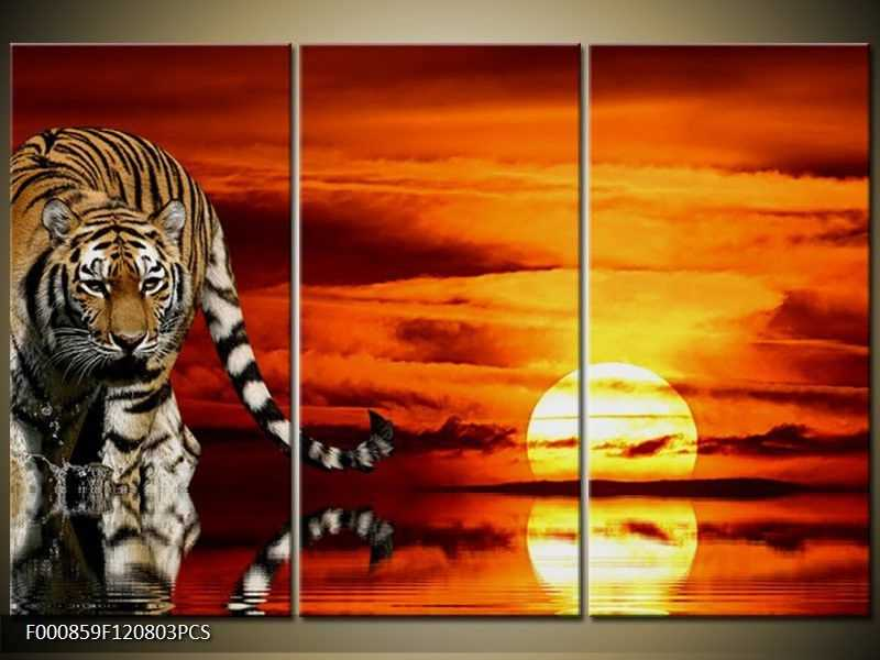 Obraz na zeď - tygr